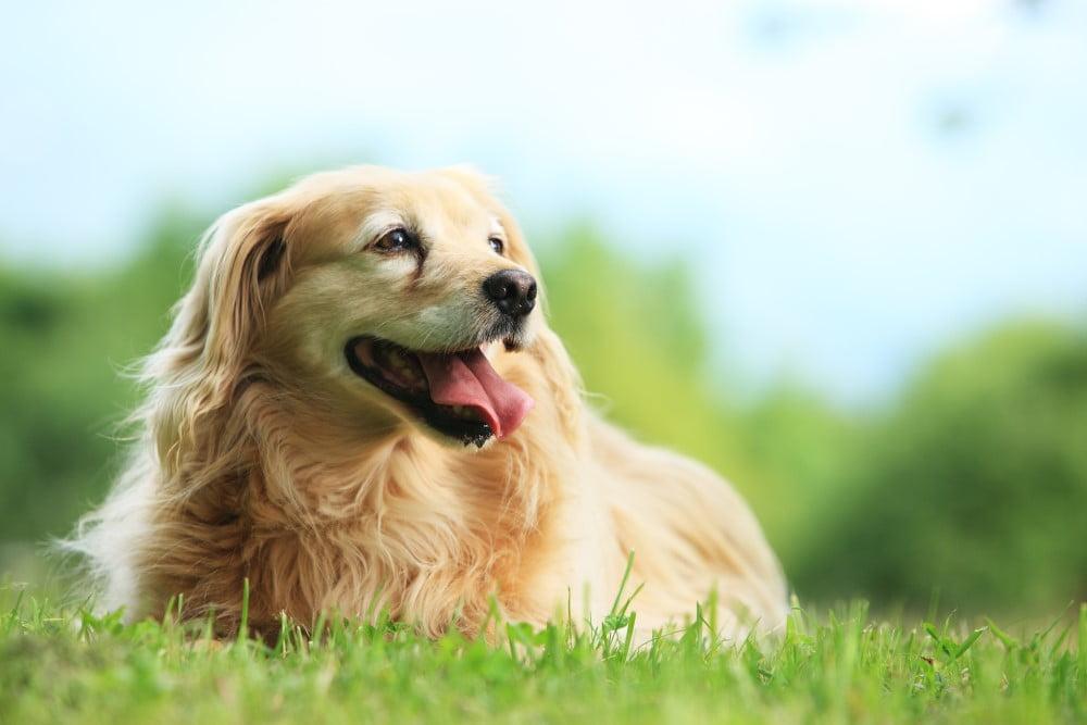 Sød hund der ikke har et GPS halsbånd på